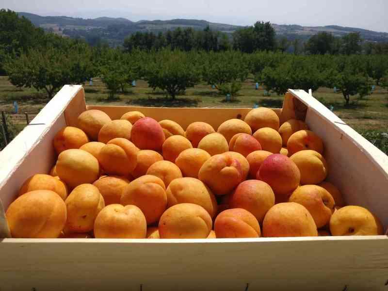 cagette abricot