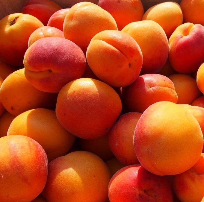 abricot du soleil