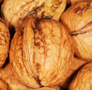 Fruits de l'automne par excellence, nous travaillons les noix en bio.