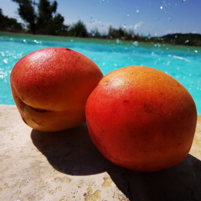 sun-apricot